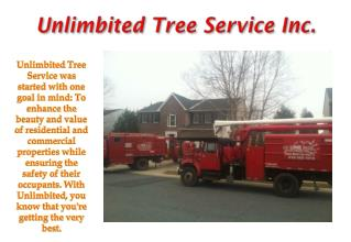 Annapolis Tree Removal Company