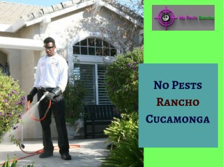 Emergency Pest Control Services in Claremont & Montclair