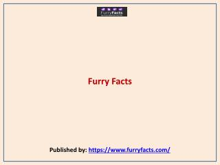 FurryFacts-Pet Care