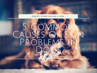 5 Common Causes Of Skin Problems In Dogs