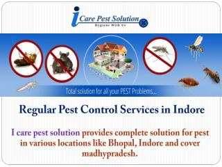 Best Pest Control Services in Indore