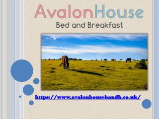 Bed and breakfast lyndhurst