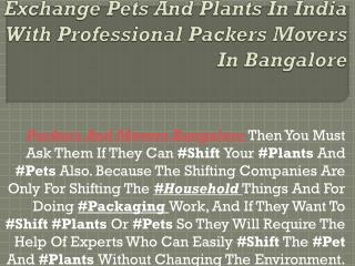 Exchange Pets And Plants In India With Professional Packers Movers In Bangalore