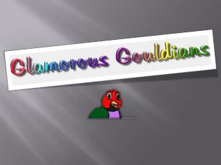 Buy Parakeet Bird Online from Glamorous Gouldians