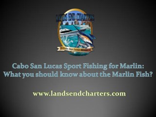Cabo San Lucas Sport Fishing for Marlin: What you should know about the Marlin Fish?