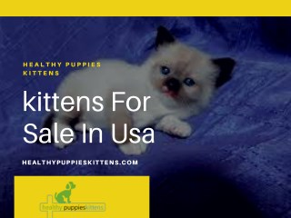 kittens For Sale In Usa