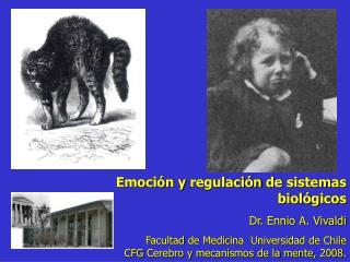 Emoción  y  regulación  de  sistemas biológicos Dr. Ennio A. Vivaldi Facultad  de  Medicina   Universidad de Chile
