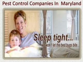 Pest Control Companies In Maryland
