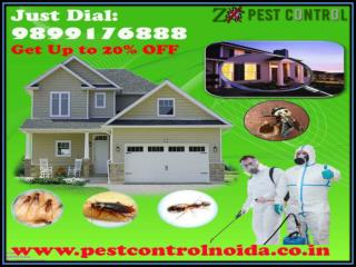 One of the Largest Pest Control Services In Noida | Get Up To 20% OFF