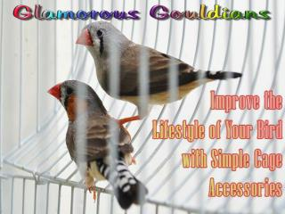 What Your Parakeet Supplies Shopping List Must Have