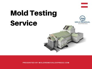 Mold testing service
