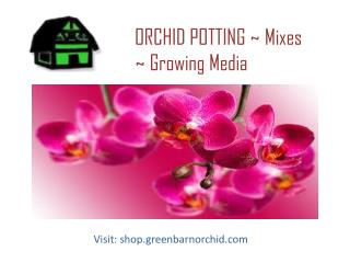 Shop Better Quality of Orchid Mixes For Your Orchids