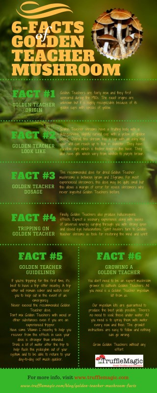 6 Facts of Golden Teacher Mushroom