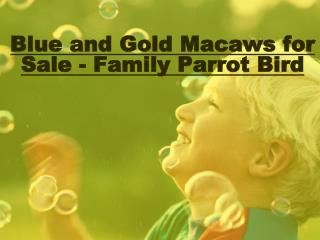Blue and Gold Macaws for Sale - Family Parrot Bird