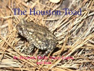 The Houston Toad