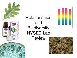 Relationships and Biodiversity NYSED Lab Review
