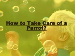 Parrot Caring Tips - Family Parrot Bird