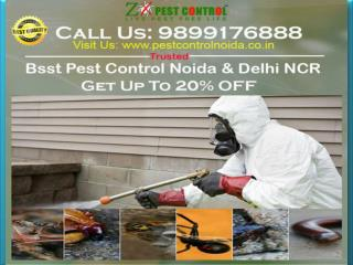 Let's Get Affordable Budget in Our Pest Control Noida | Get Up To 20% OFF
