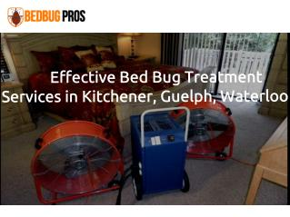 Bed Bug Extermination in Kitchener, Waterloo & Cambridge