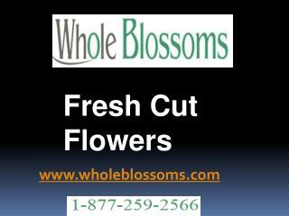 Fresh Cut Flowers - www.wholeblossoms.com