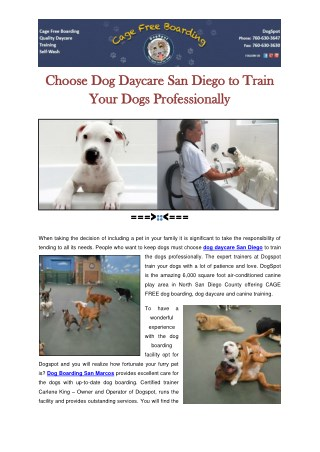 Choose Dog Daycare San Diego