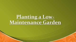 Gravel Garden - Low Maintenance Garden