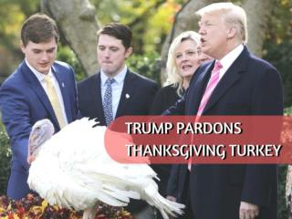 Trump pardons Thanksgiving turkey