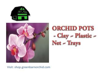 Best Orchid Nursery in Florida