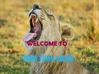 INDIA TIGER SAFARI | TIGER SAFARI IN INDIA