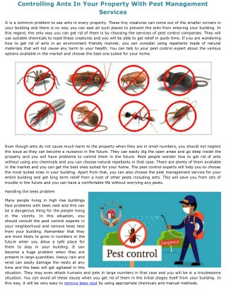 Controlling Ants In Your Property With Pest Management Services