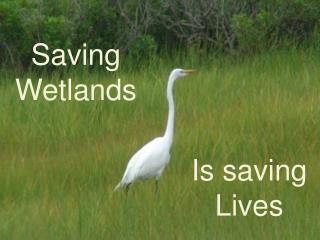 Saving Wetlands