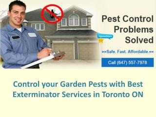 Control Your Garden Pests with Best Exterminator Services In Toronto ON