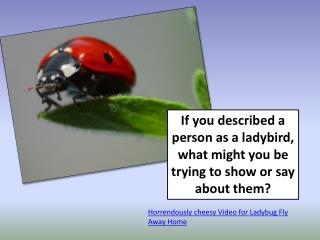 If you described a person as a ladybird, what might you be trying to show or say about them?