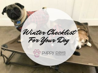 Winter Checklist For Your Dog