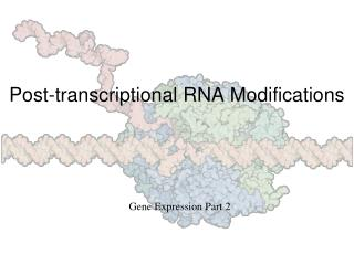 Post-transcriptional RNA Modifications