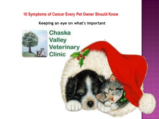10 Symptoms of Cancer Every Pet Owner Should Know - Chaska Valley Veterinary Clinic.