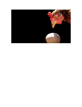 Hatching Chicken Eggs, Incubator For Eggs, Egg Turner For Incubator, Goose Egg Incubation