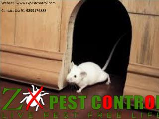 Avail Summer Special Discount in Pest Control Noida