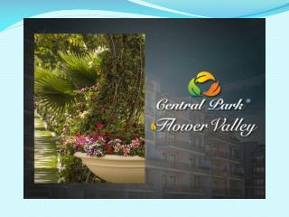 Central Park Flower Valley Cerise Suites