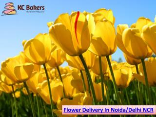 Flower and Cake Home Delivery Online for Birthday at Your Door