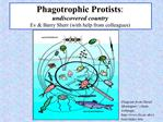 Phagotrophic Protists:  undiscovered country Ev  Barry Sherr with help from colleagues
