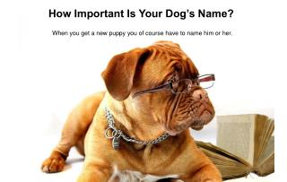 How Important Is Your Dog's Name?
