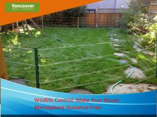 Wildlife Control Make Your House Atmosphere Nuisance Free