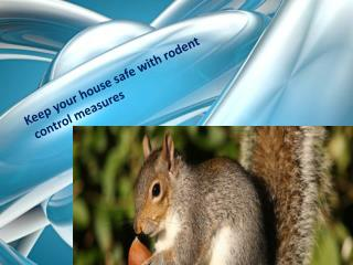 Keep Your House Safe with Rodent Control Measures