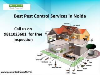 See Effective Result with Pest Control Service Noida