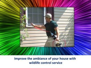 Improve the ambiance of your house with wildlife control service