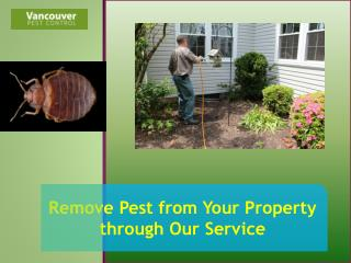 Remove Pest from Your Property through Our Service