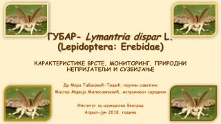 Губар Lymantria dispar l
