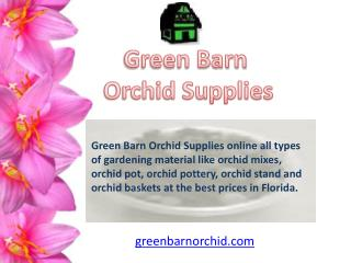 Orchid Mixes for Sale Online in Florida