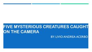 Mysterious Creatures Caught on Camera by Livio Andrea Acerbo